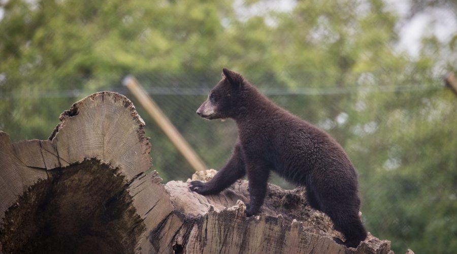 baby Bear WSP May 2021 13